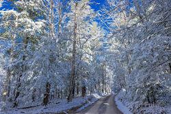 Smoky Mountain Snow, December 2020