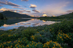 Balsamroot at Oxbow Bend