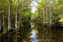 Photos of Big Cypress Swamp, Corkscrew Swamp, Everglades