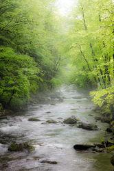 Little River Impression