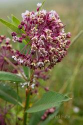 Shenandoah Summer Wildflowers 2016