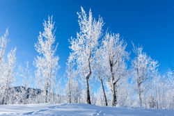 aspen, hoarfrost, tetons, road, winter, Grand Teton