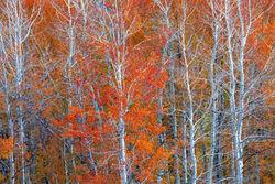 Moose Wilson Autumn