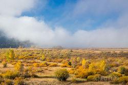 Fog Over the Flats