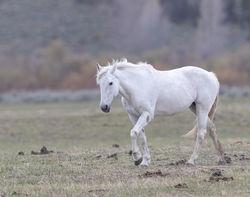 horse, Tetons, Grand Teton