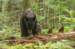 Bear on Log