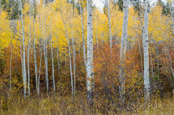 Fall's Understory Patterns