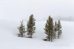 togwotee pass, snow, spring, Tetons, Grand Teton