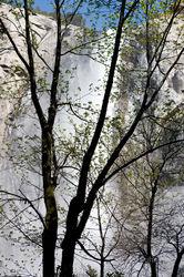 Bridalveil Falls Sentinel