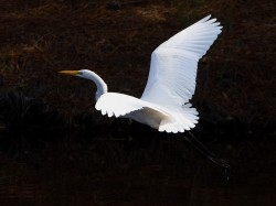 egret, kiawah, south carolina