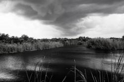 Everglades Storm