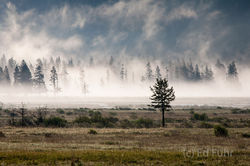 yellowstone, photos,