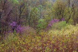 Spring Redbud Palette