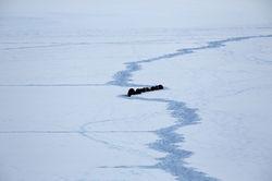 Otter Retreat