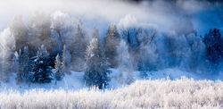 Winter on the Snake River