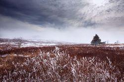 Shenandoah Winter