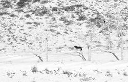Wolf Wait
