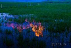 Spring Pond Reflection