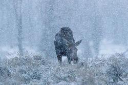 Snow Feed