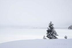 Jackson Lake, Winter 2016