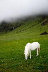 Iceland Serenity