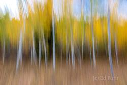Grand Teton Fall Abstracts 2020