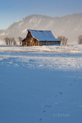 Wolf Tracks to Moulton Barn
