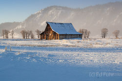 Wolf tracks in the snow, a clear winter morning and Moulton Barn stands in the snow.
