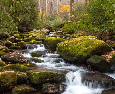 Roaring Fork Fall Stream