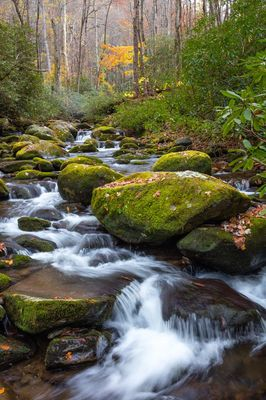 Roaring Fork Autumn Stream
