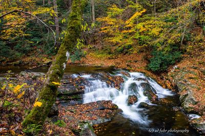 Autumn on the West Prong