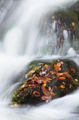 Leaf in a Fall Stream