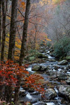 Tremont Fall Stream