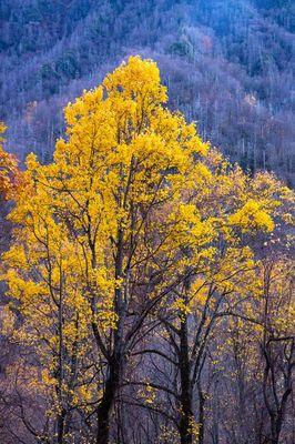 Autumn at the Chimneys