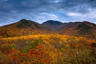 Autumn Spectacle at Campbell Overlook