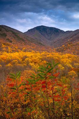 Smoky Mountain Fall Overlook