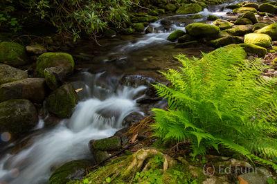 Fern and Stream