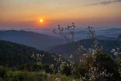 Summer Sunset on a Flower Filled Overlook