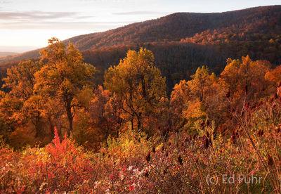 Shenandoah, Shenandoah National Park, photo, photography, images, mountains, wilderness, Virginia, fall, autumn, foliage, color