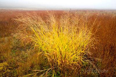 Big Meadows Fall Grass
