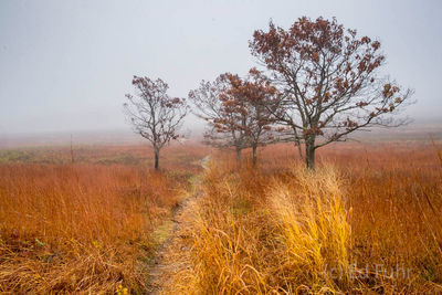 Big Meadows in Autumn