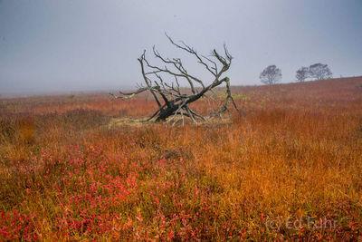 Big Meadows Memory