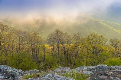 Lifting Spring Fog