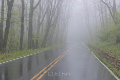 Spring Drive in the Fog