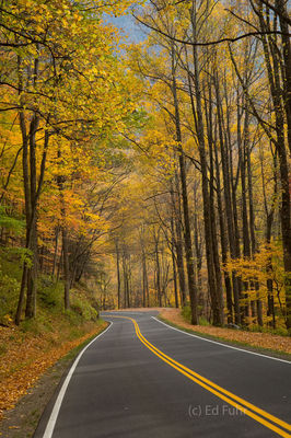 Autumn Drive II, GSMNP
