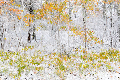 Snow and Fall In the Woods