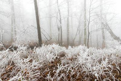 Frozen Understory