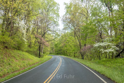 Spring Colors on Skyline Drive