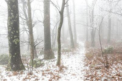 Rime Ice on Appalachian Trail