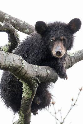 Bedraggled Bear
